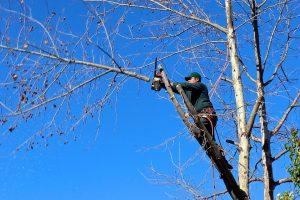 Tout savoir sur l'élagage et l'abattage d'arbre